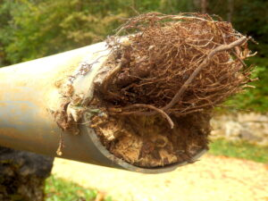 tree-root-in-pipe